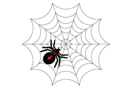 SEO优化中所说的引蜘蛛是什么意思?