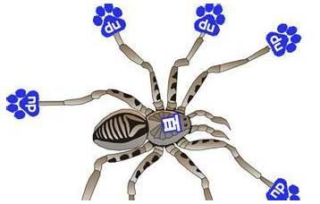 让网站内容频繁被搜索引擎蜘蛛抓取