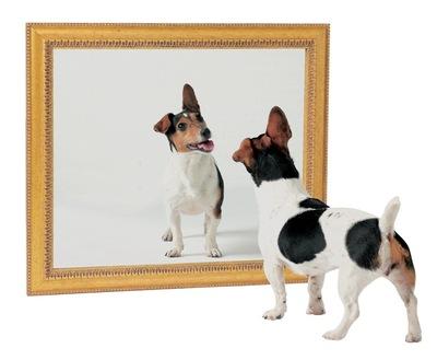 浅谈镜像网站的产生及预防措施