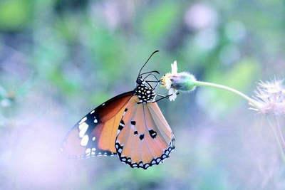 象蚂蚁一样工作,象蝴蝶一样生活