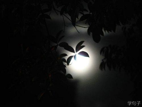 关于白天不懂夜的黑的说说句子